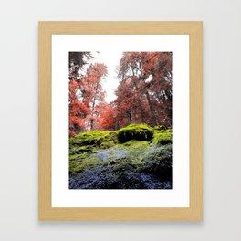 Rainbow Cavalcade, Oregon woods Framed Art Print