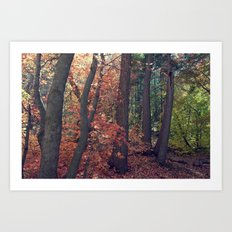 Crimson Forest Art Print