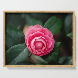 Pink Perfection Camellia Japonica Blooms in Spring Serving Tray