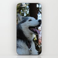 husky iPhone & iPod Skins featuring Husky. by Saremotion