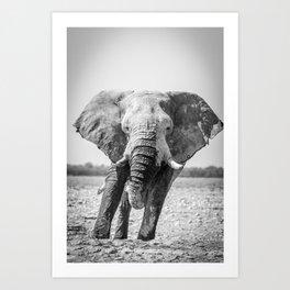 B&W Elephant 5 Art Print