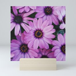 Purple African Daisies Mini Art Print