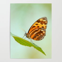Butterfly pattern nature Love Poster