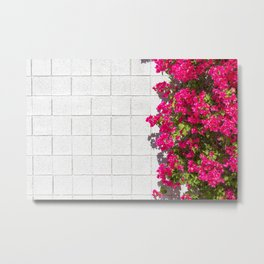 Bougainvilleas and White Brick Wall in Palm Springs, California Metal Print