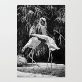 Flamingos (Black and White) Canvas Print