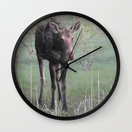 Evening Missy eating willow Wall Clock