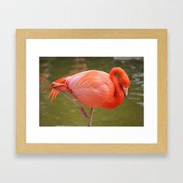 Flamingo! Framed Art Print