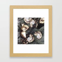 Autumn shells Framed Art Print