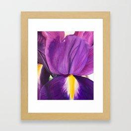 Iris I Framed Art Print