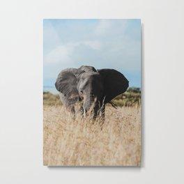 Wild Elephant Metal Print