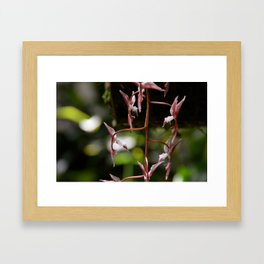 Hummingbird Orchids Framed Art Print
