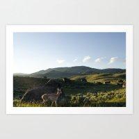 Pronghorn Antelope - Yellowstone National Park Art Print