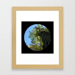 Trees from below 4 Framed Art Print