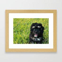 Brody Framed Art Print