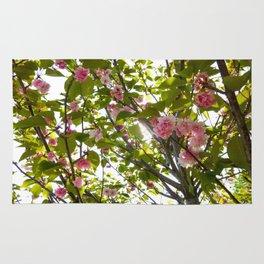 Under Pink Boughs (2) Rug
