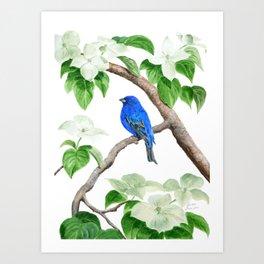 Royal Blue-Indigo Bunting in the Dogwoods by Teresa Thompson Art Print