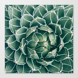 Succulent bloom II Canvas Print