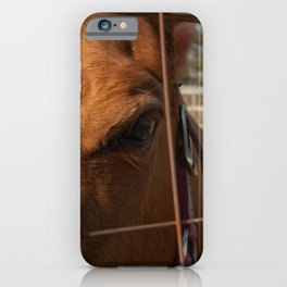 Fenced In Animal / Horse Photograph iPhone Case