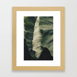 Elephant Ear Leaves Framed Art Print