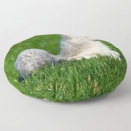 A Sleepy Newborn Lamb In A Field Floor Pillow