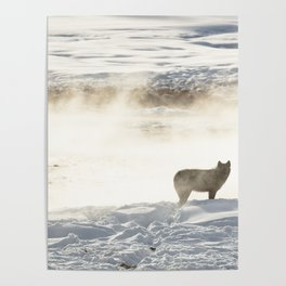 Yellowstone National Park - Wolf and Hot Spring Poster