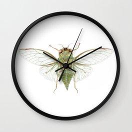 Cicada 2016 Wall Clock