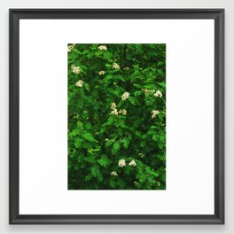 Greenery II Framed Art Print