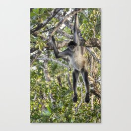 Spider Monkey Acrobatics in Belize Jungle Canvas Print