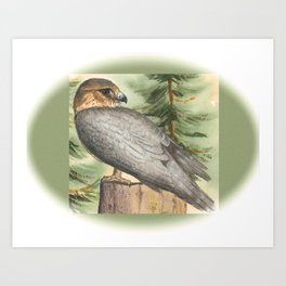 Merlin Falcon (Keir) Art Print