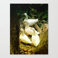 duck Canvas Prints featuring duck by gzm_guvenc