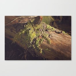 The Forest is Alive Canvas Print