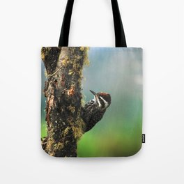 Striped woodpecker looking for breakfast Tote Bag
