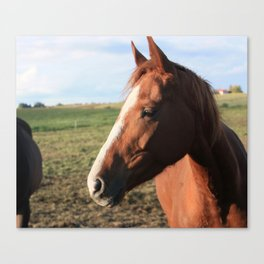 Afternoon mood of a four-legged friend Canvas Print