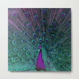 BLOOMING PEACOCK Metal Print