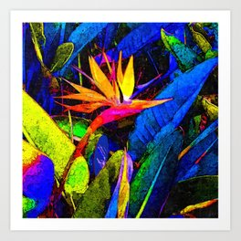 Colorful Bird of Paradise Flower and Leaves Art Print