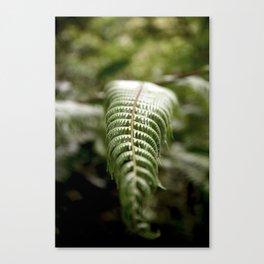 Placid Jungle Fern - Monte Verde, Costa Rica Canvas Print