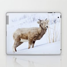 Big Horn Sheep in the Snow Laptop & iPad Skin