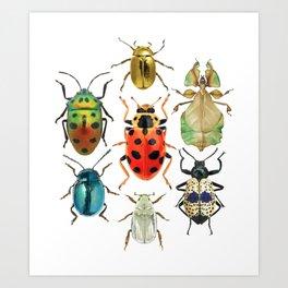 Beetle Compilation Art Print