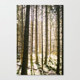 Sunlight Through Trees In Forest Woods Canvas Print