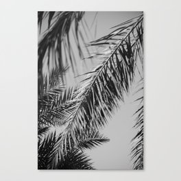 Fronds against the sky black and white Canvas Print