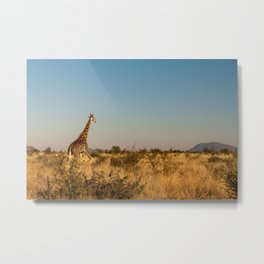 Giraffe on a Morning Walk Metal Print