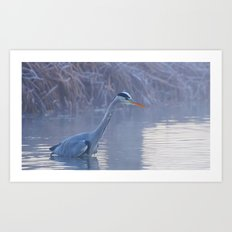 Heron Fishing Art Print