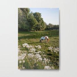 Summer Evening Horse Metal Print