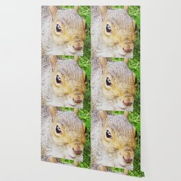 The many faces of Squirrel 5 Wallpaper
