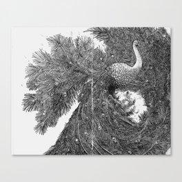 Peacock I Canvas Print