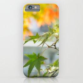 Green maple leaves at Koko-en Garden in Himeji, Japan. iPhone Case