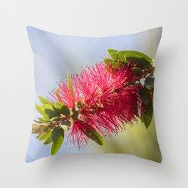callistemon red flower in bloom Throw Pillow