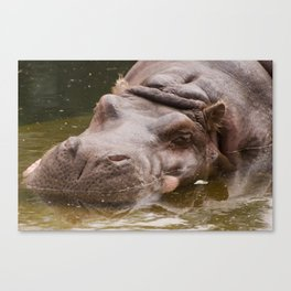 Huge bored Hippopotamus Canvas Print