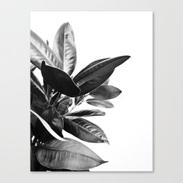 Grandiflora II - bw Canvas Print