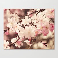 cherry blossom Canvas Prints featuring Cherry Blossom by Erin Johnson